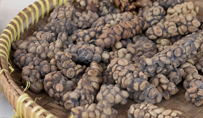 Kopi Luwak Cat Poo Coffee in Bali